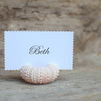 Beach Wedding Pink Sea Urchin Place Card Holders- Scallop Rectangle Card Reception Table Chic Decor - Guest Escort Favor Ocean Nautical