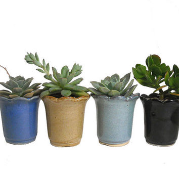 4 Potted Succulents In Round & Scalloped Rim Ceramic Pots Wedding Party Favors Gifts