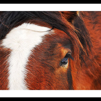 Horse Portrait by FairchildPhotography on Etsy