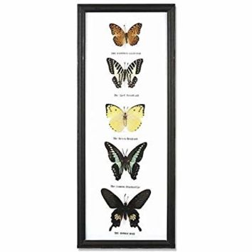 REAL 5 Butterflies Wall decor Hanging Collection Taxidermy in frame