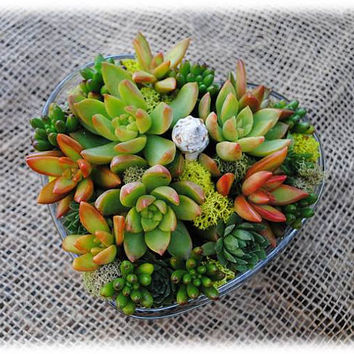 Succulent Arrangement in Heart Shaped Glass Container - Valentine's Day Decor -Great Gift or Centerpiece - DIY Kit