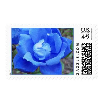 blue rose postage stamps