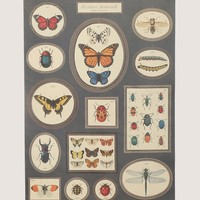 Butterflies & Insects Poster - Interior at Gypsy Warrior