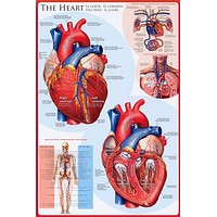 Anatomy of the Heart Cardiology Education Poster 24x36