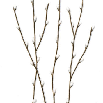 "Original Watercolor Painting, Pussywillow Branches, Spring Pussywillows Botanical Art, Neutral Nature Home Decor, Brown, Gray, Grey 10"" X 8"""