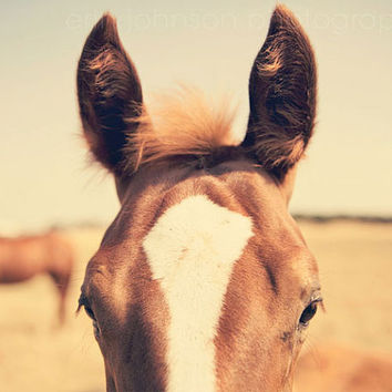 horse photography brown baby nursery wall art decor close up ears foal photograph animal 8x10